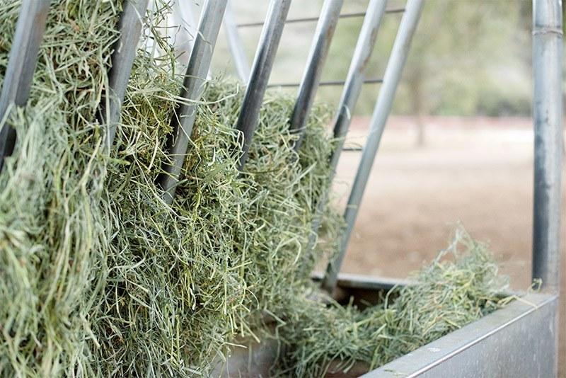 Hay - Sawmill Mountain Vineyards