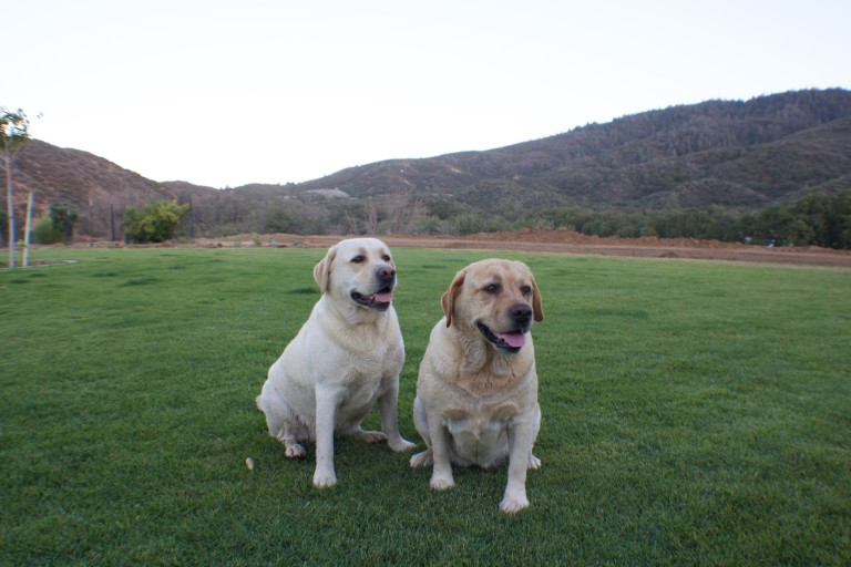 Two Dogs - Sawmill Mountain Vineyards